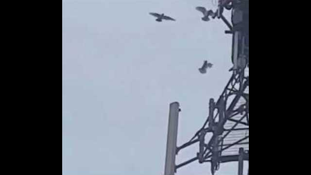 Doves Attack 5G Tower