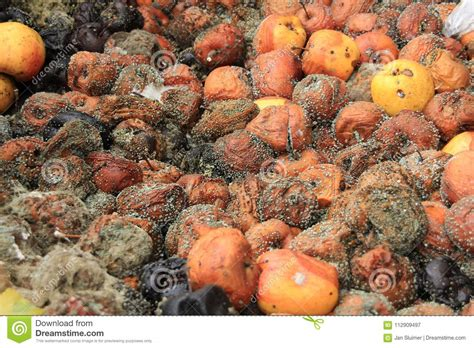 rotting fruit picture 9
