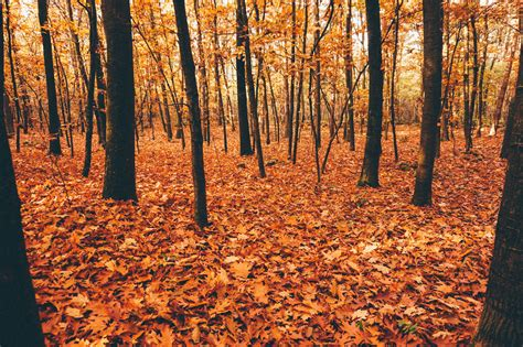 Seasonal falling of leaves like our cells example 1