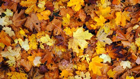Seasonal falling of leaves like our cells example 2