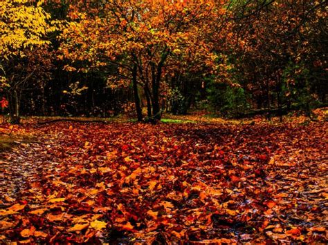 Seasonal falling of leaves like our cells example 3