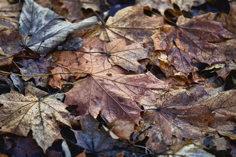 Seasonal falling of leaves like our cells example 4