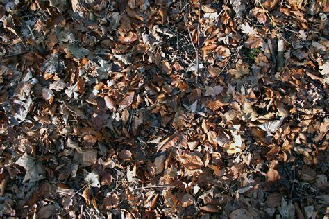 Seasonal falling of leaves like our cells example 6