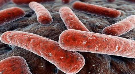 most bacteries are good!
