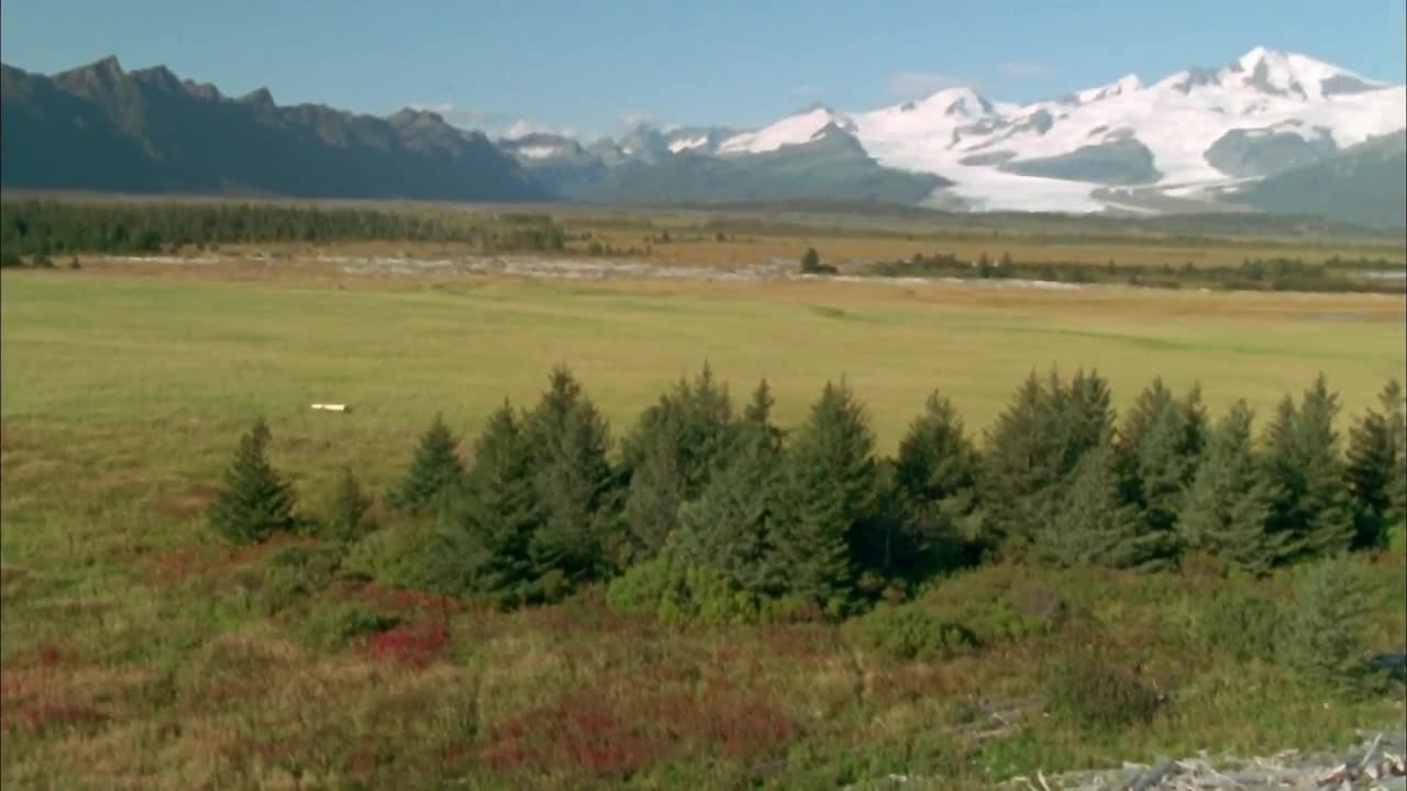 Grizzly Man 2005 1080p